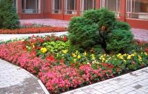 Ландшафтный дизайн внутреннего дворика здания Администрации города (2011).