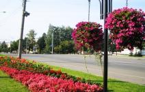 Цветники по ул. Пушкинской (2011).